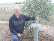 Ken McDonald with one of the erected plaques in the Coimadai Avenue of Honour. Photo – Jessica Howard
