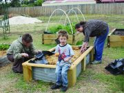 Gardening at the Darley Community Art Garden Photo - MSC